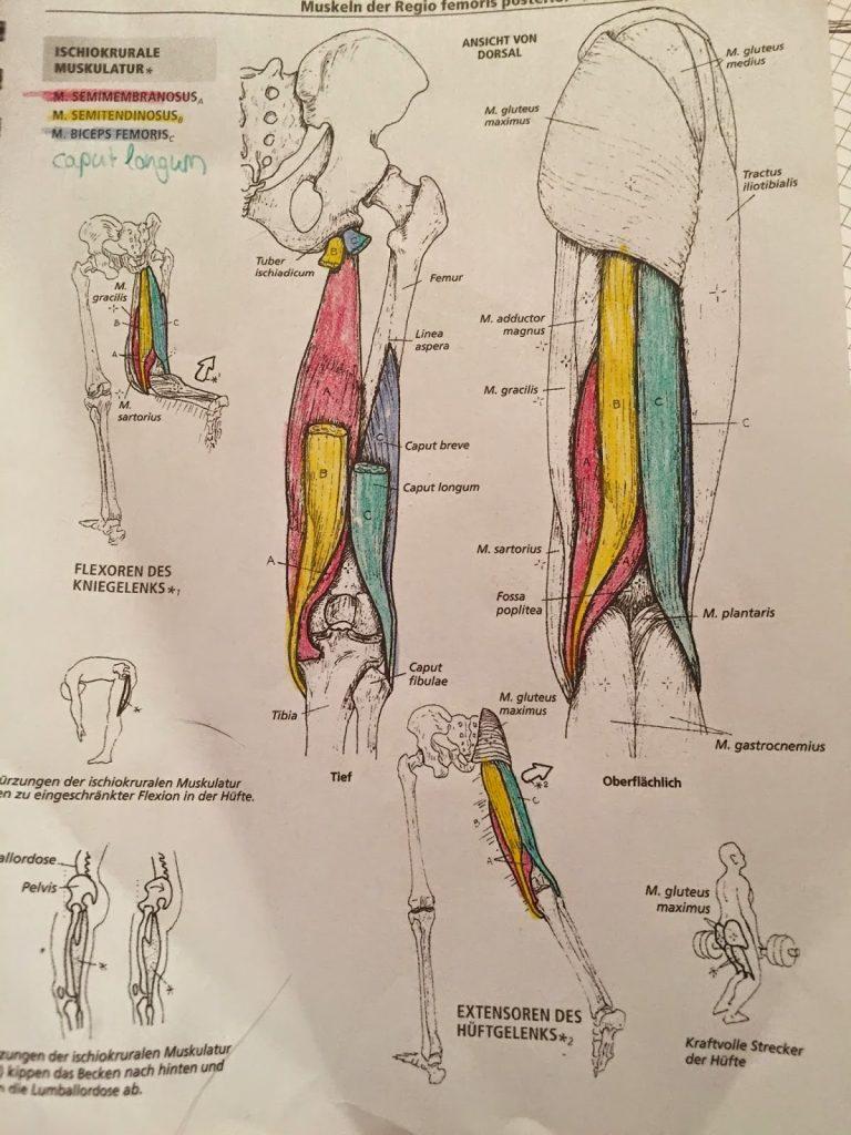 Erfreut Anatomie Malbuch Pdf Zeitgenössisch - Druckbare Malvorlagen ...